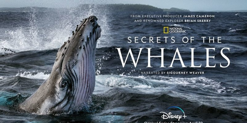 NatGeo's SECRETS OF THE WHALES – On Disney+ April 22